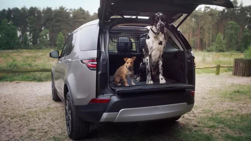 Внедорожники Land Rover укомплектуют душем для собак 1