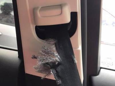 Скромный сирийский хомяк изгрыз в лоскуты автомобиль британки 1