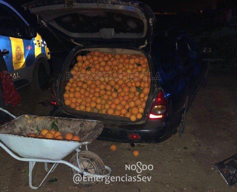 Полиция задержала три автомобиля, под завязку набитых украденными апельсинами 1