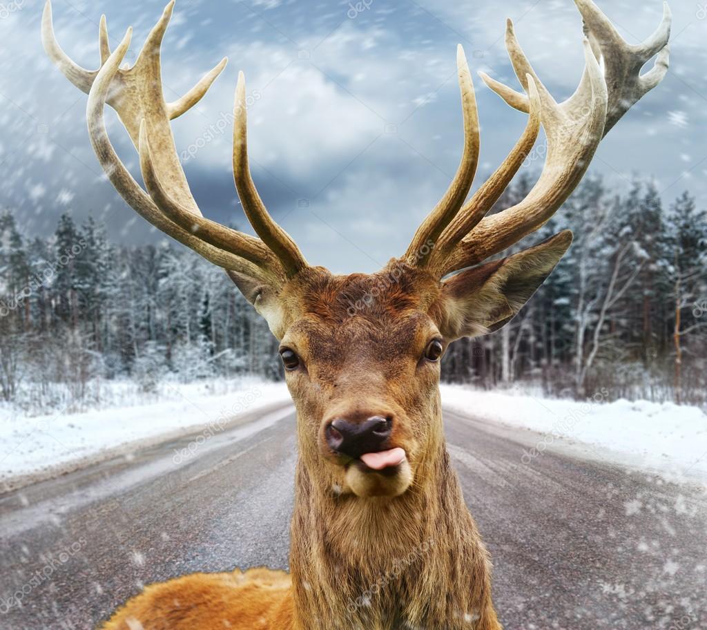 В Финляндии появилось приложение для отслеживания оленей на дорогах 1