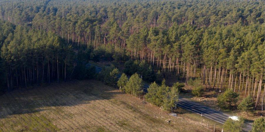 Суд разрешил компании Tesla уничтожать лес под Берлином 1