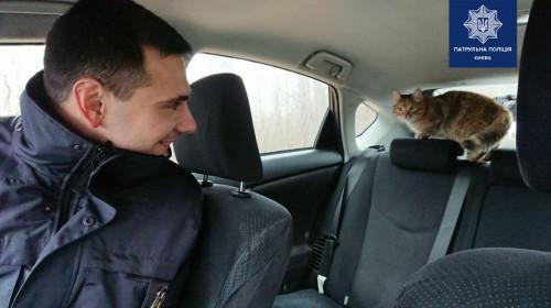 Необычный «гость» в патрульном автомобиле повеселил пользователей Сети 1