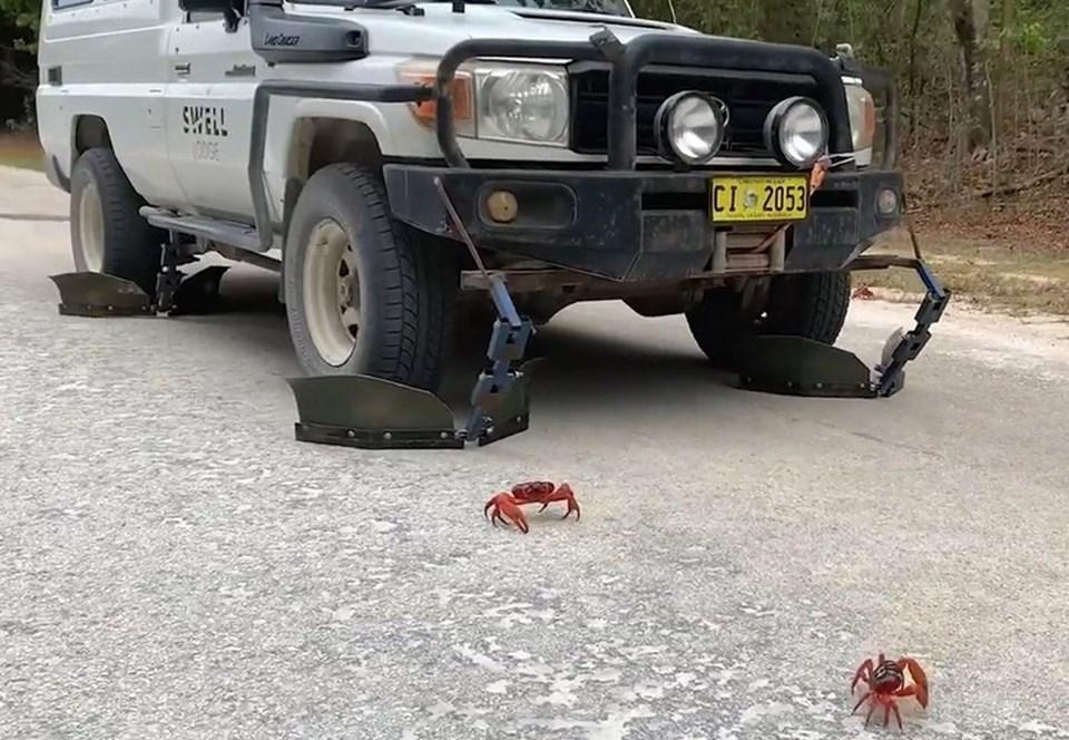 Австралиец придумал способ защиты мигрирующих крабов от колес своего автомобиля 1