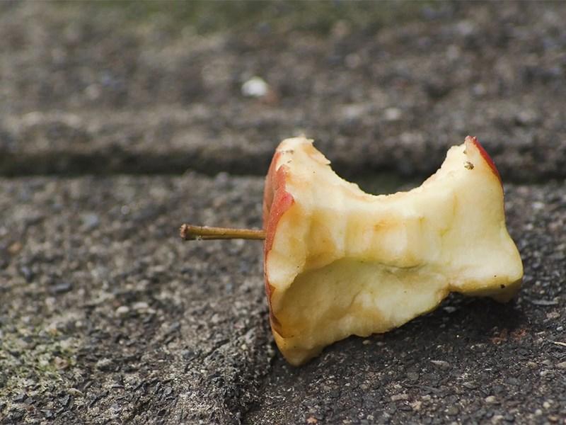 Выбрасывать огрызки яблок из машины оказалось опасно для природы 1