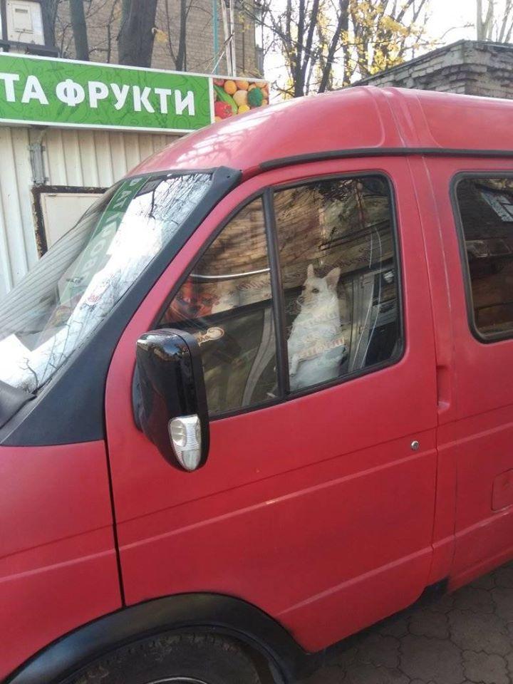 В Украине заметили милую собаку за рулем «Газели» 1
