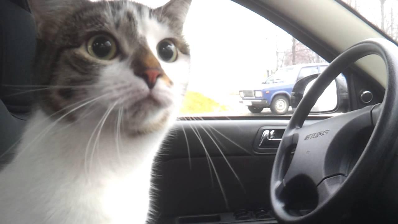 Кошка повредила «Мерседес» на 24 тысячи долларов 1