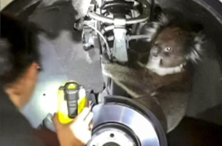 Неожиданный «пассажир» под машиной шокировал водителя 1