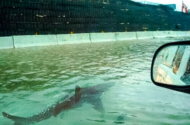 Акулы и крокодилы вместо пешеходов на дороге 1
