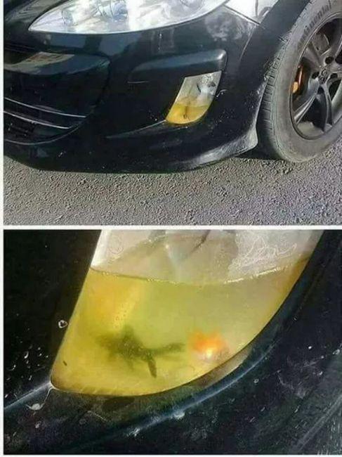 Автомобиль с «противотуманными рыбками» шокировал соцсети 1