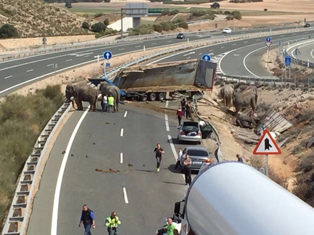 В Испании перекрыли трассу из-за сбежавших слонов 2