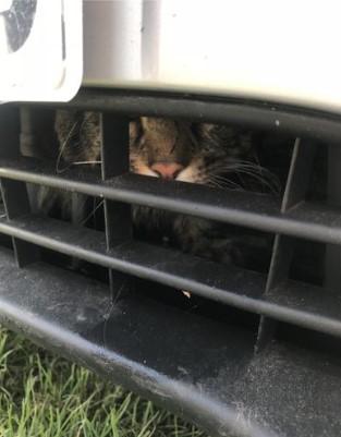 Кот залез в радиаторную решетку и проехал 130 километров 1