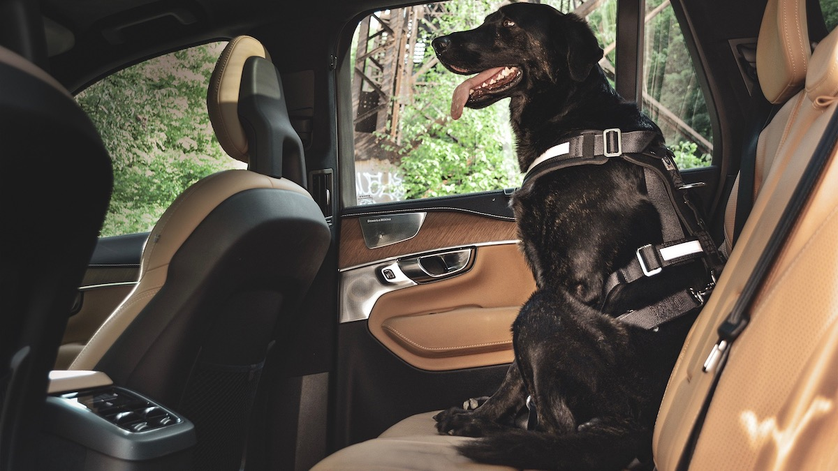 Исследование: насколько сильно животные отвлекают водителей 1