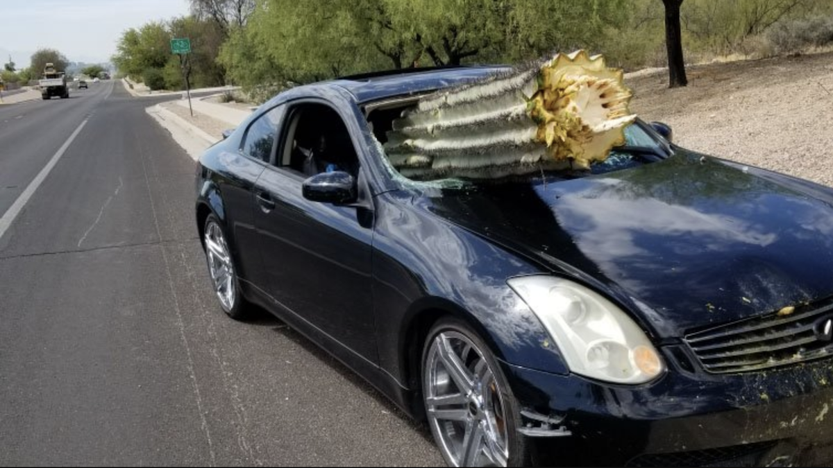 Опасная встреча: кактус насквозь пробил автомобиль 1