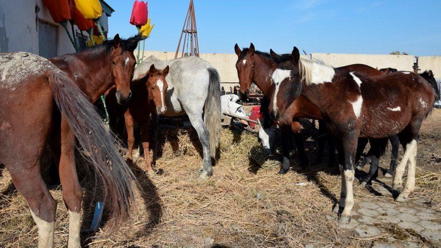 В Казахстане на штрафстоянку отправили табун лошадей 1