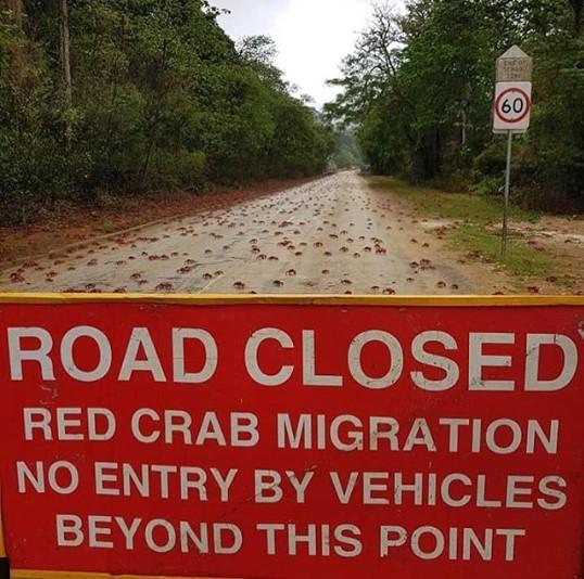 В Австралии закрыли дорогу из-за крабов 1