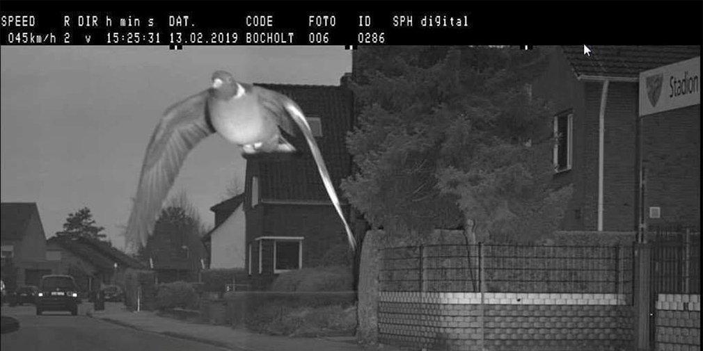 Дорожная камера зафиксировала превышение скорости голубем 1