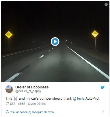 Автопилот Tesla предотвращает наезд на кролика 1