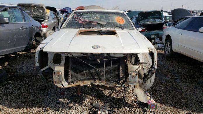 Редкий Ford Mustang Cobra нашел приют на свалке 2