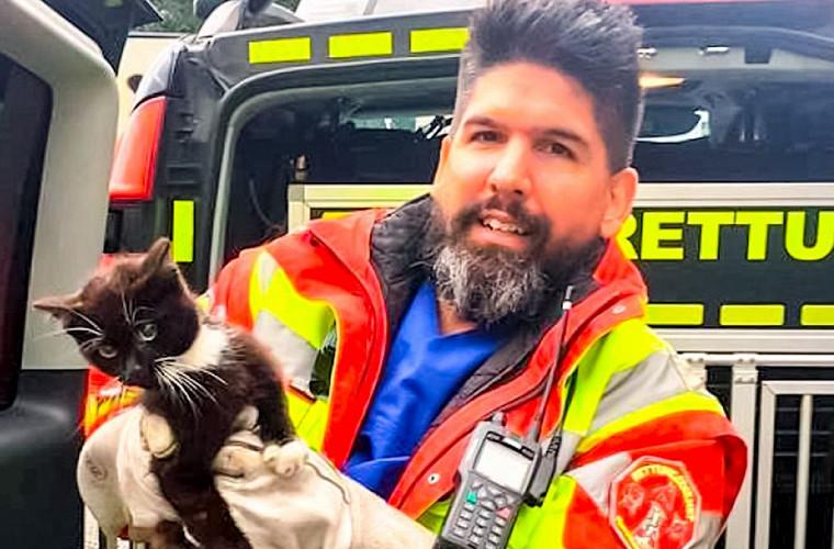 Полиция целый час пыталась поймать котёнка на автомагистрали 1