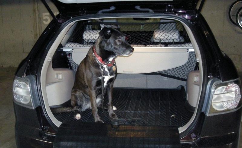 Автомобилистам могут запретить возить животных в салоне авто 1