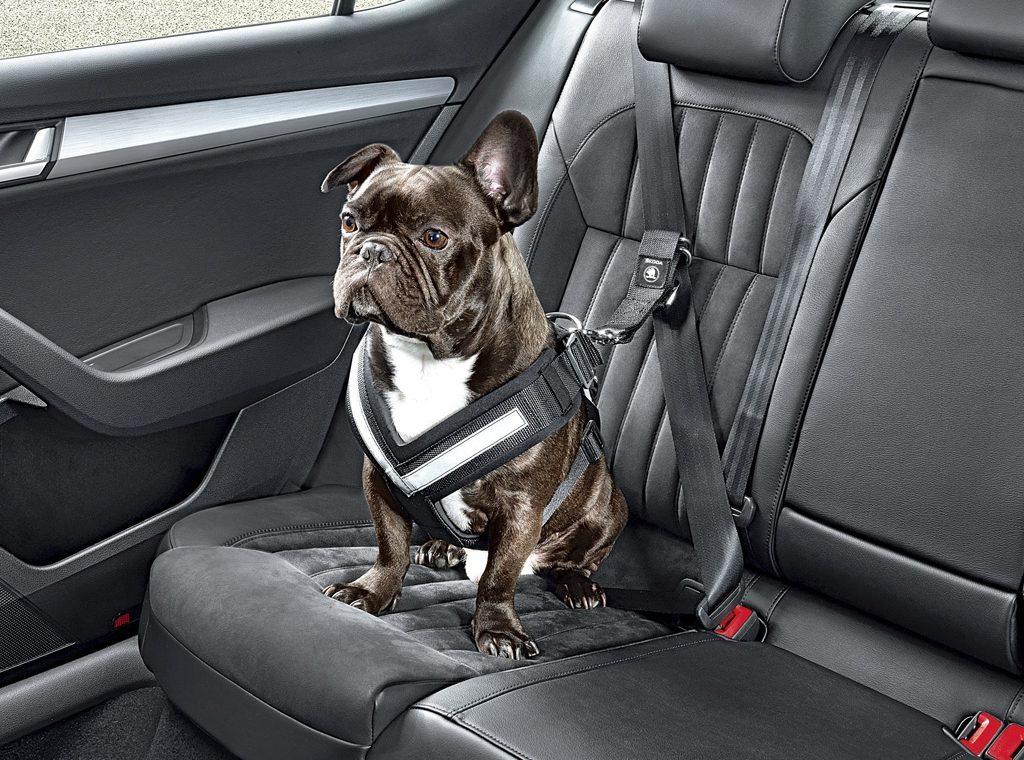 Автомобилистам могут запретить возить животных в салоне авто 3