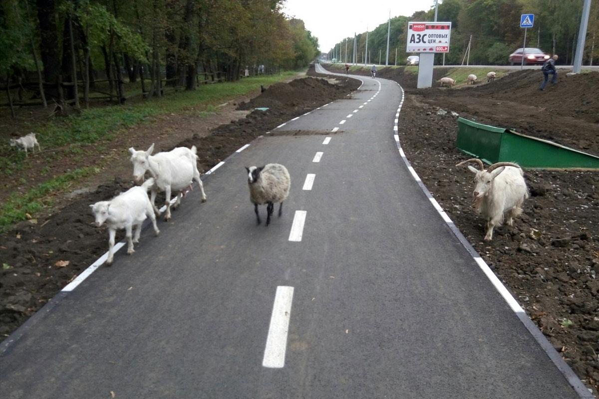 Животные заблокировали движение на трассе 3