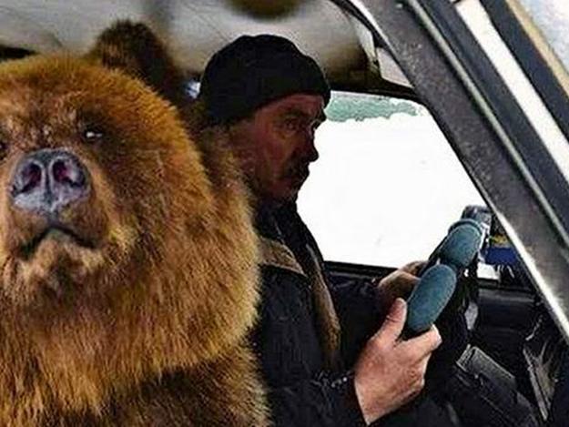 В Украине обнаружен «автохам с цыганами и медведем» 1