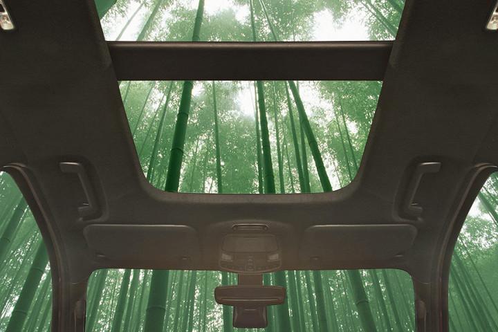 Ford хочет строить автомобили из бамбука 1