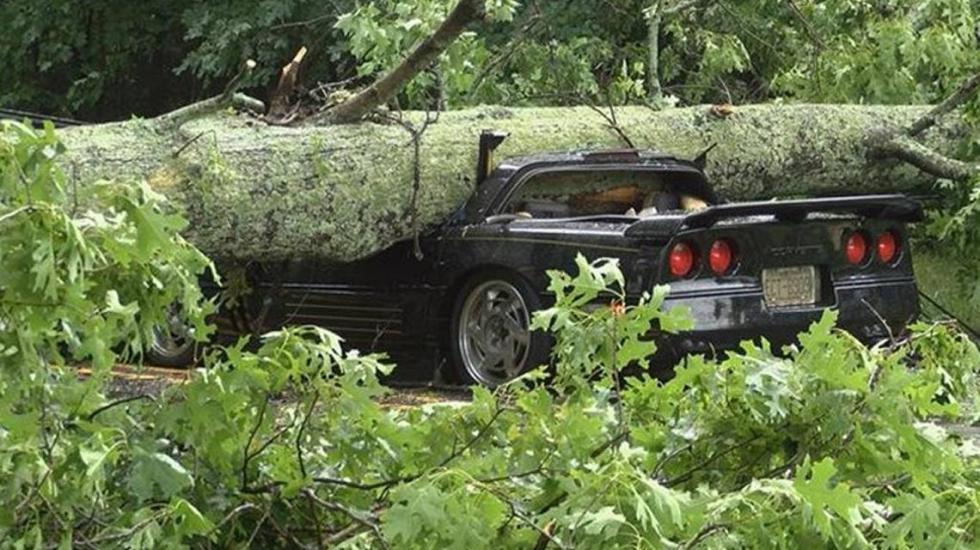 Водитель спорткара чудом выжил после падения дерева на него 1