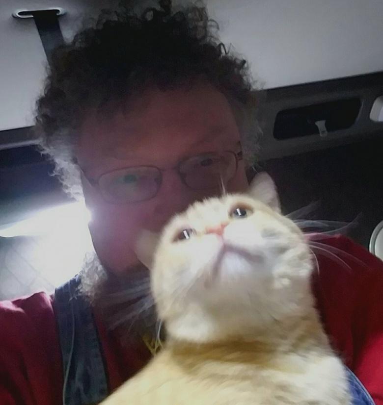 Выпрыгнувший из «фуры» кот, нашелся через 650 км 1