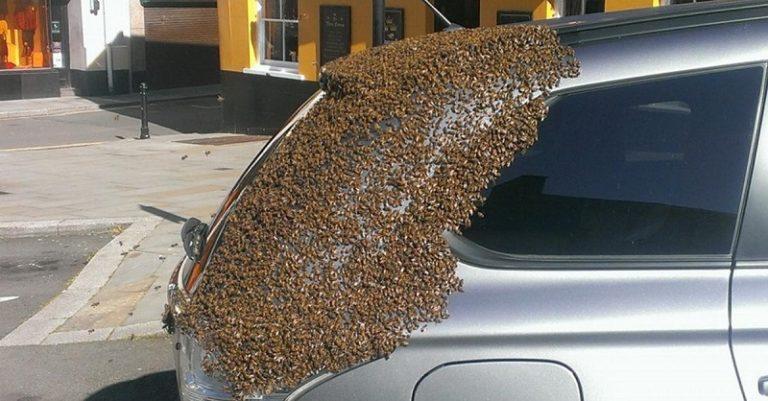 Двое суток рой из 20000 пчел «преследовал» автомобиль Mitsubishi 1