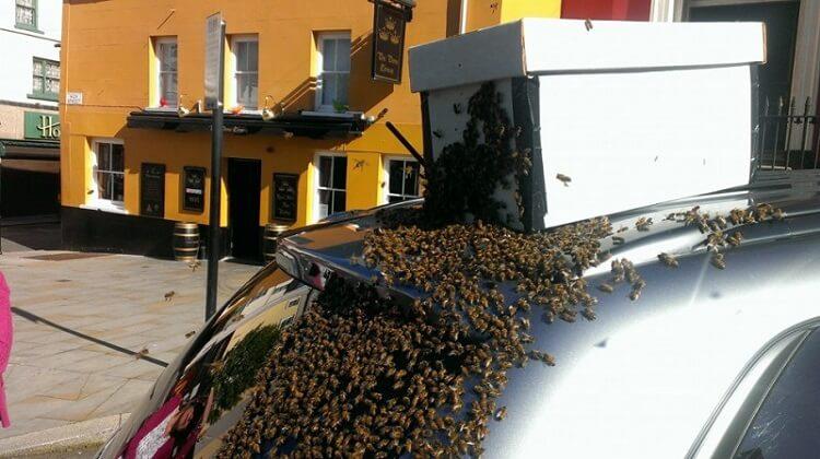 Двое суток рой из 20000 пчел «преследовал» автомобиль Mitsubishi 2