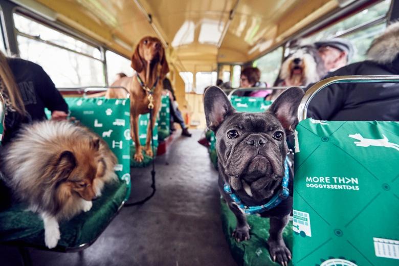В Лондоне запустили экскурсионный автобус для собак 2