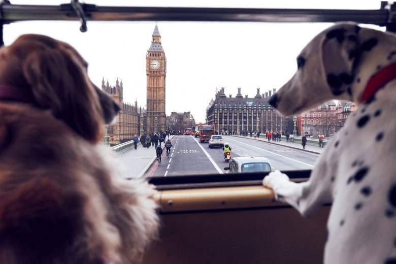В Лондоне запустили экскурсионный автобус для собак 1
