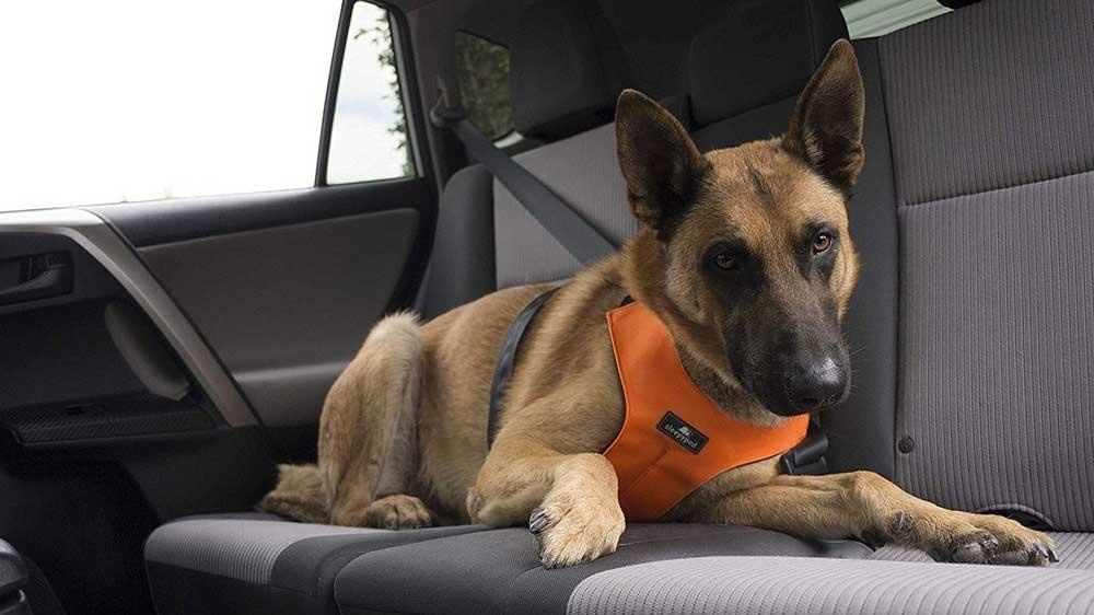 Рейтингприспособлений для комфортной перевозки животных в автомобиле 2