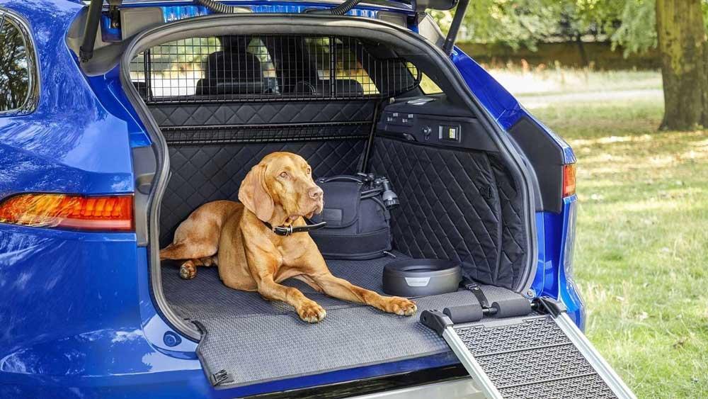 Рейтингприспособлений для комфортной перевозки животных в автомобиле 4