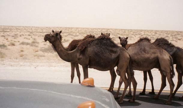 Самые нелепые правила дорожного движения в разных странах мира 8