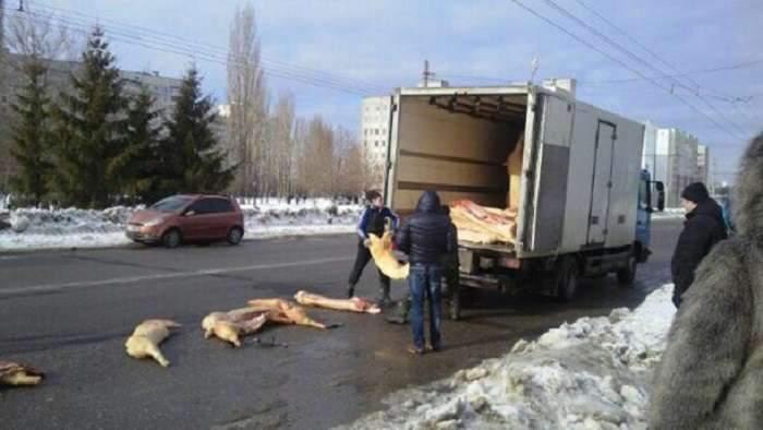 Выпрыгнувший из грузовика тигр создал пробку на трассе 1