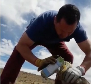 Водитель грузовика спас дикого лиса от молочного пакета