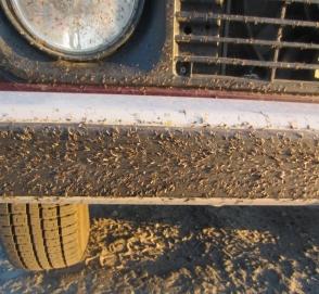 Миллионы комаров атаковали автомобиль рыбака