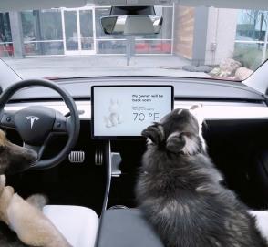 Tesla придумала для своих электрокаров «собачий» режим