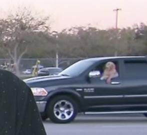 Телевизионщики сняли собаку, едущую за рулем