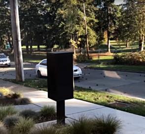 Стальные шары из грузовика вызвали переполох на дороге