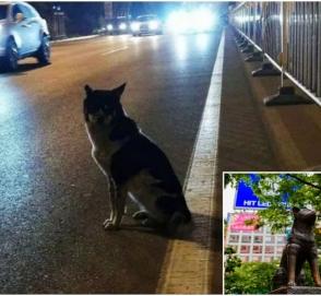 Хатико из Китая более 80 дней ждет на трассе погибшую хозяйку
