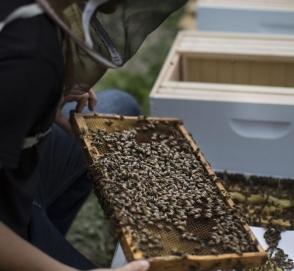 Ford наймет на работу сотни тысяч пчел